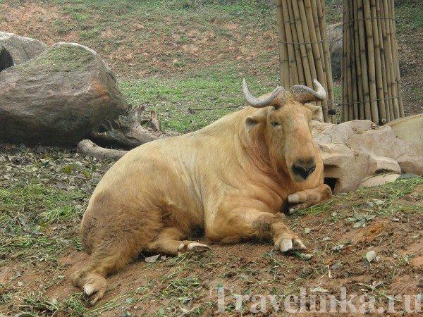 гуанчжоу достопримечательности зоопарк (1)
