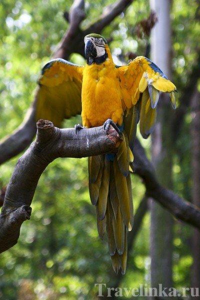 гуанчжоу достопримечательности зоопарк (4)