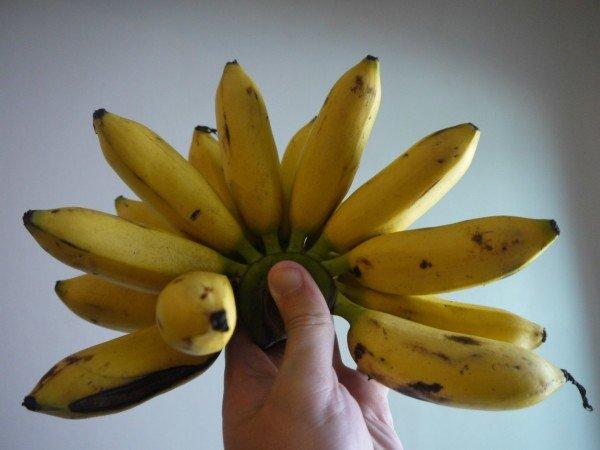 фрукты тайланда фото (17)