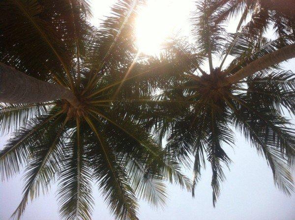 муйне, муйне вьетнам, муйня, отели муйне, фатьет муйне, муйне карта, погода в муйне. муйне фото (50)