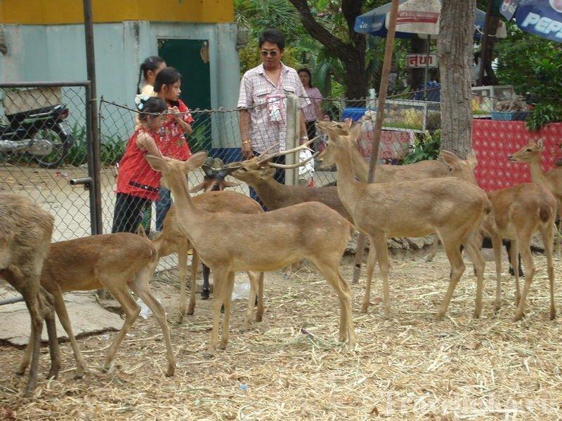 Chiang Mai Zoo (2)