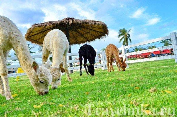 pattaya chto posmotret tailand (3)