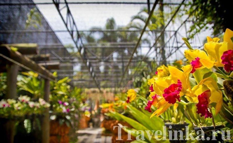 pattaya thailand dostoprimechatelnosti (5)