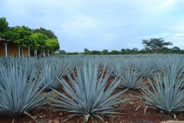 отчет о поездке в мексику в отпуск