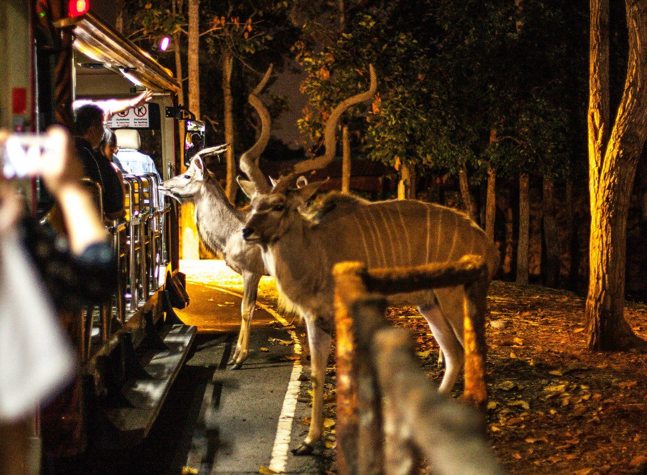 Чианг Май: ночное сафари