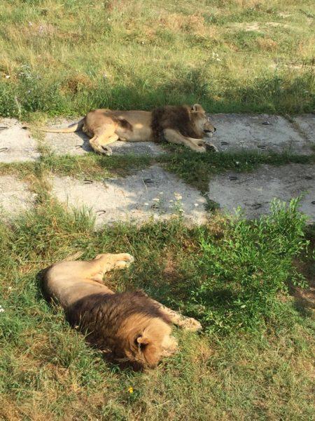 Парк Тайган в Крыму