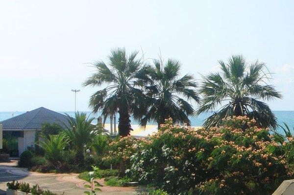 Отдых в Дагомысе 2017 летом: климат