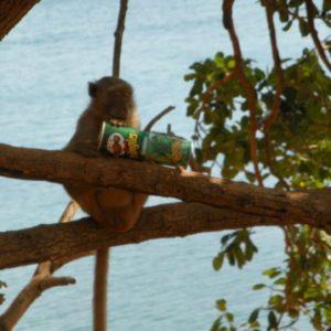 Пляж обезьян на Ко Лане (Nual Beach)