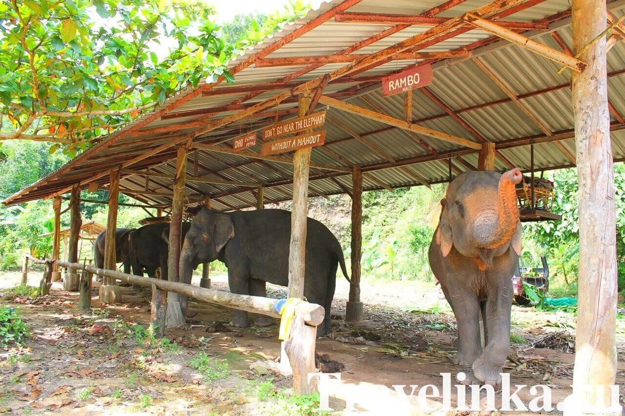 Слоновья ферма Elephant Camp на Клонг Прао (Ко Чанг)