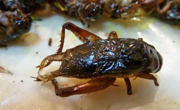 насекомые Таиланда