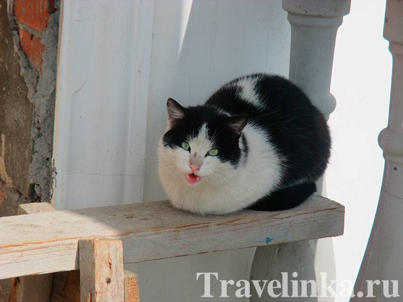 Красавица-кошка