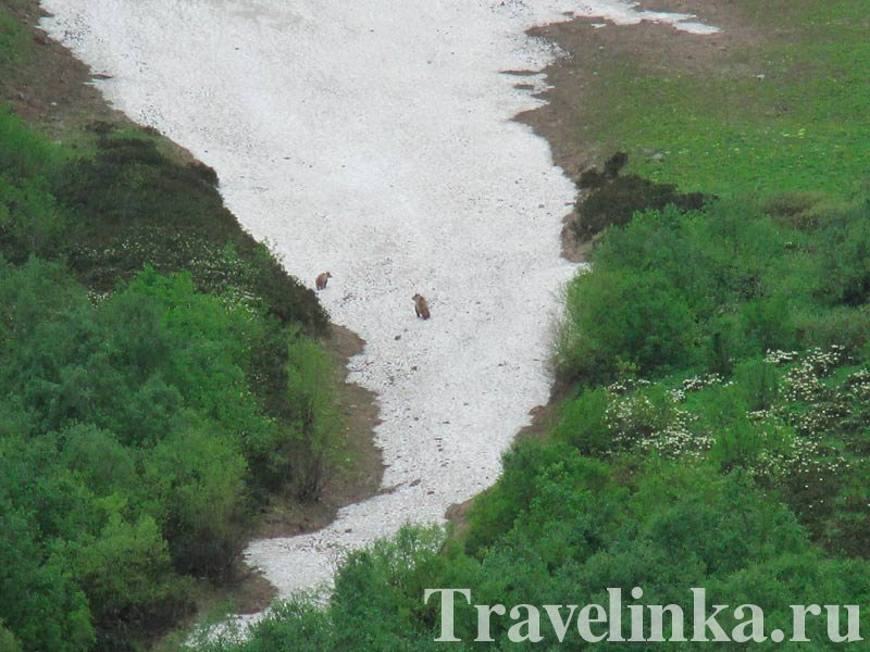 Бадукские озера. Медведи