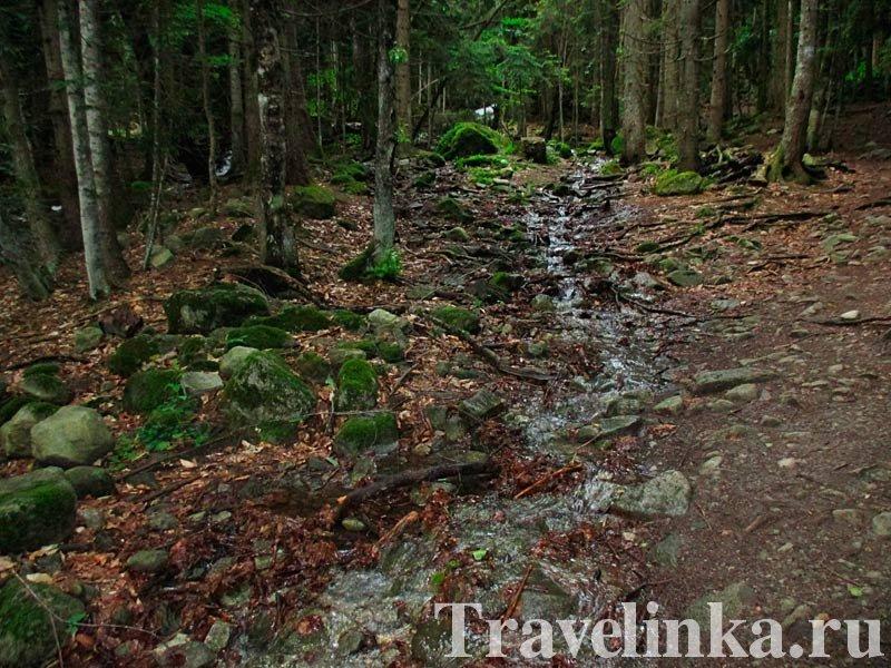 Дорога к водопаду «Шумка»