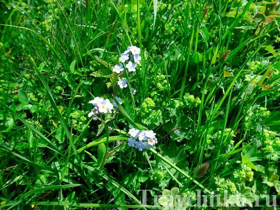 Цветы на Кавказе