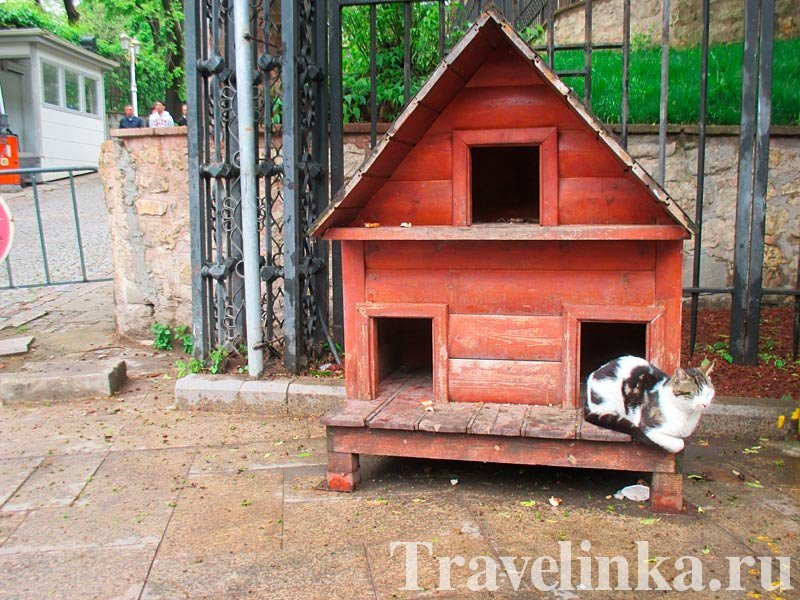 Дом для кошек в Стамбуле