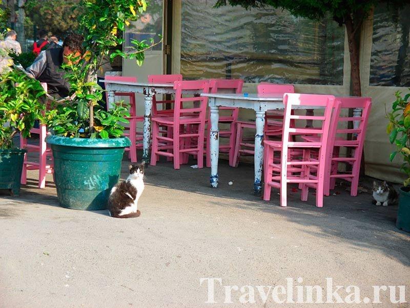 Стамбул-город кошек