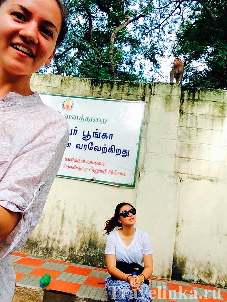 стажировка в Индии