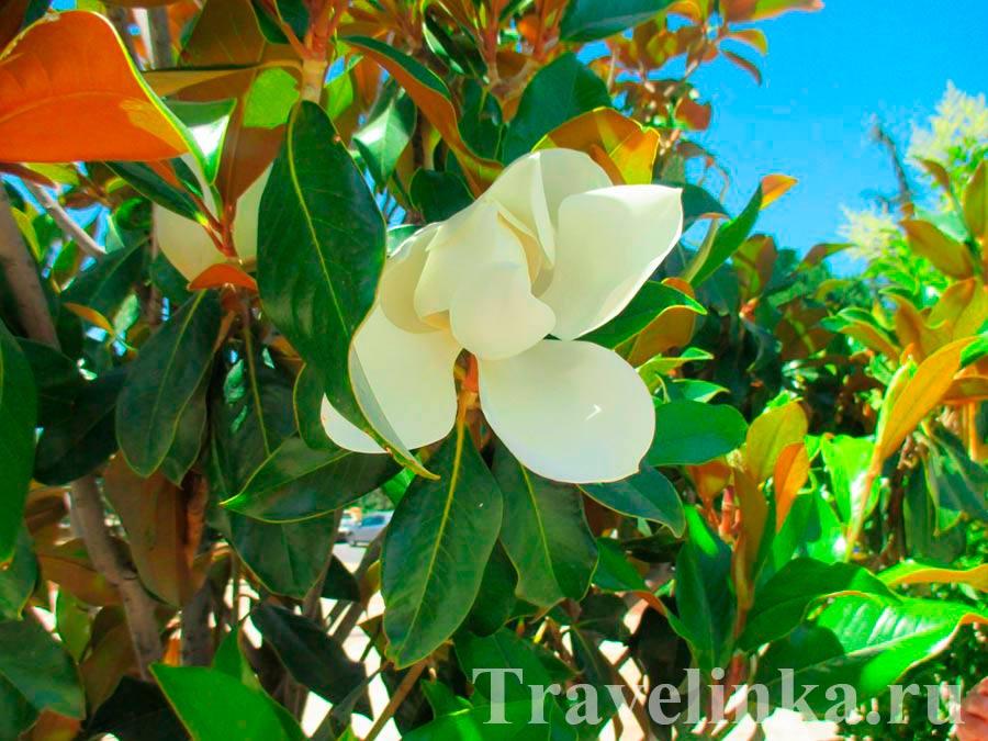 Цветы в Гуадиксе