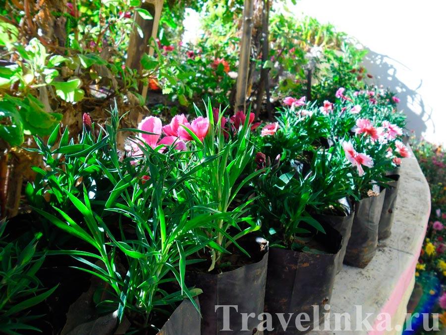 Цветы в Маунт-Абу Индия