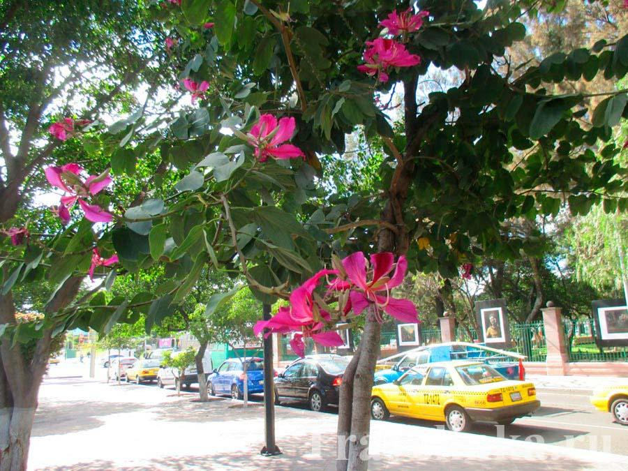 Сантьяго-де-Керетаро
