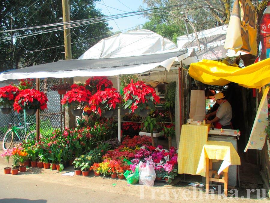 Цветы Тотолапан
