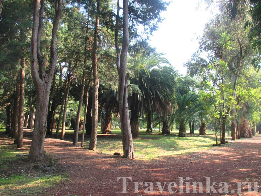 Парк Койоакан