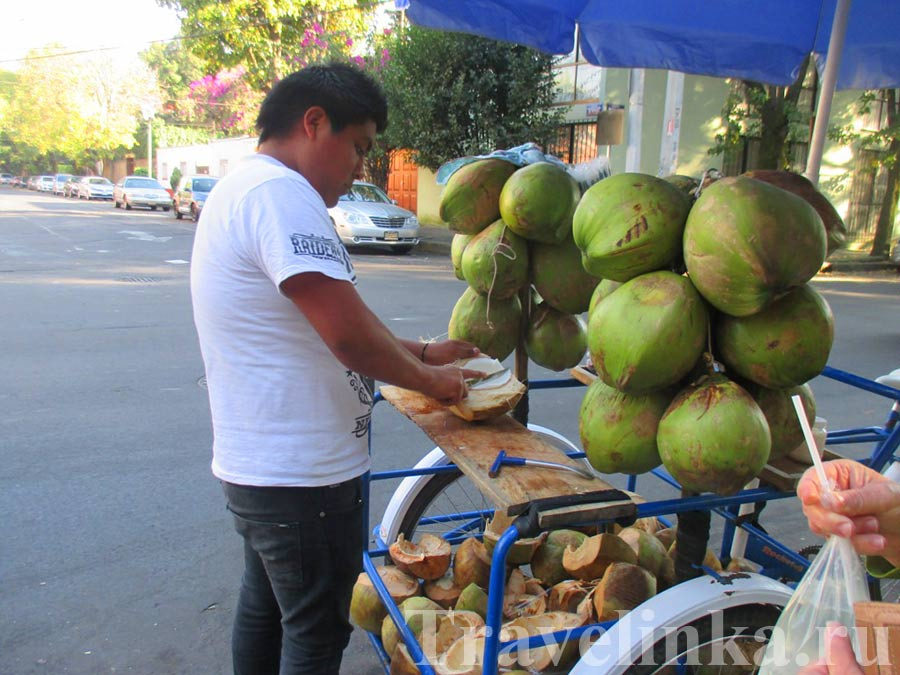 Кокосы Койоакан Мехико