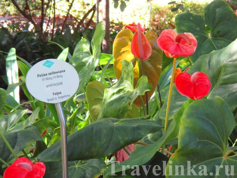 Ботанический сад Тенерифе Пуэрто-де-ля-Крус