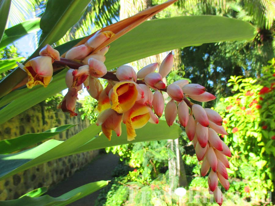 Ботанический сад Пуэрто-де-ля-Крус