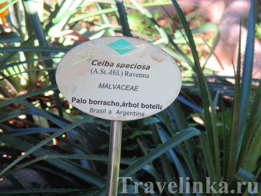 Ботанический сад Тенерифе