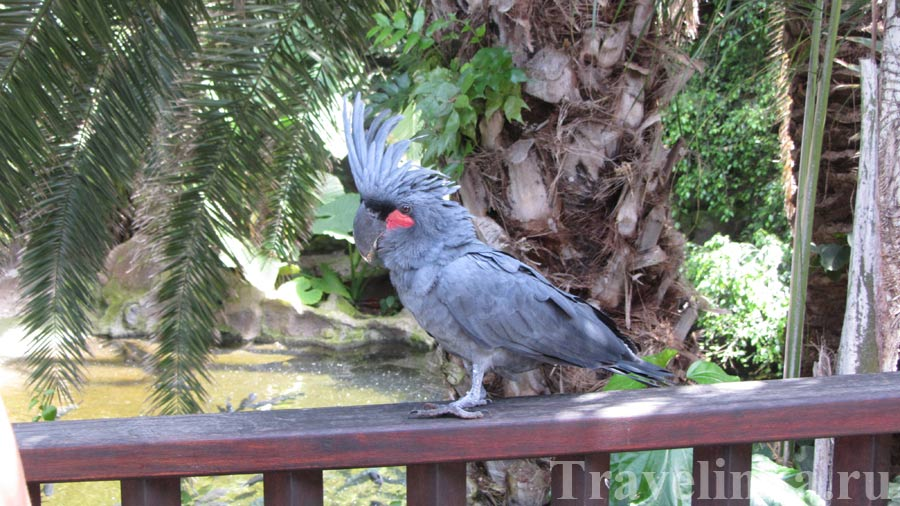 Попугай Лоро Парк