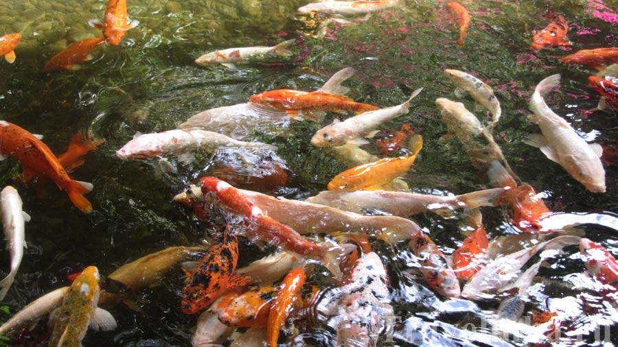 Лоро Парк рыбы