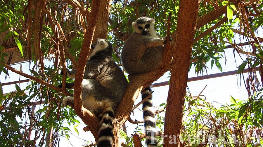 Парк обезьян Тенерифе