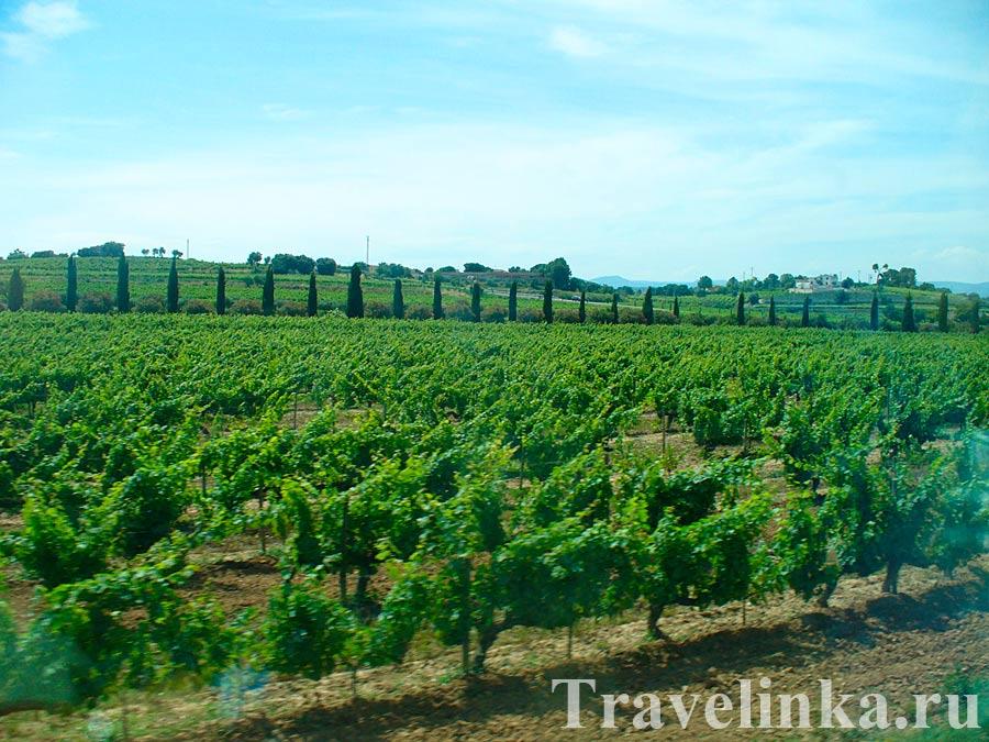 Винодельня Торрес Испания