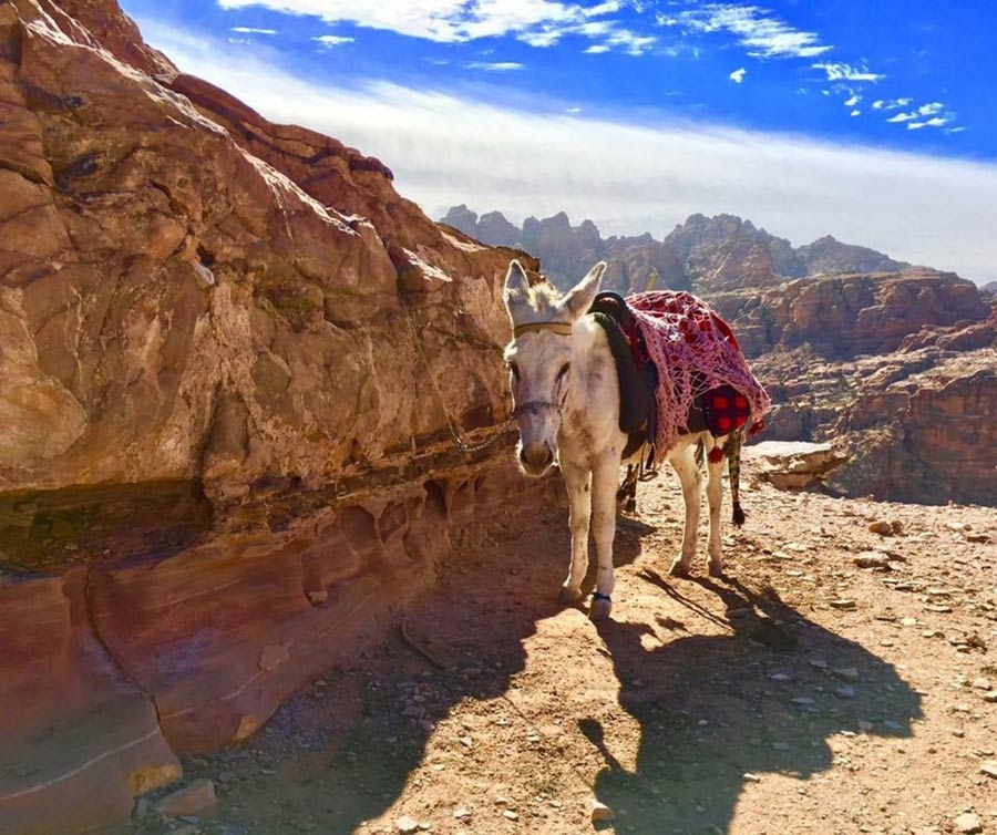 курорты Иордании где лучше отдыхать