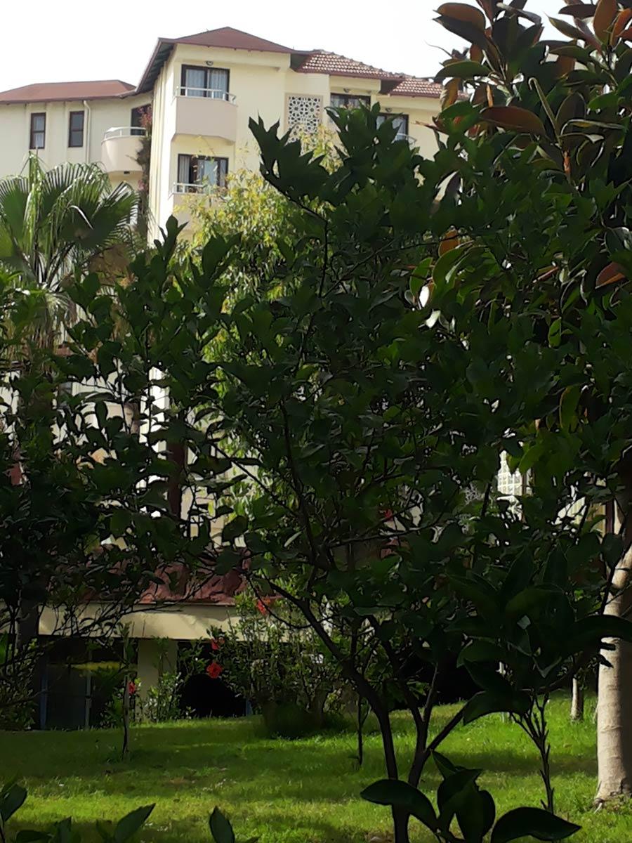 Отель MC Mahberi Beach 4* Конаклы