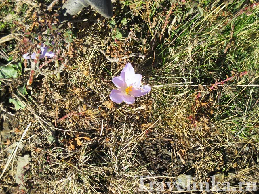 Цветы в горах Андалусии
