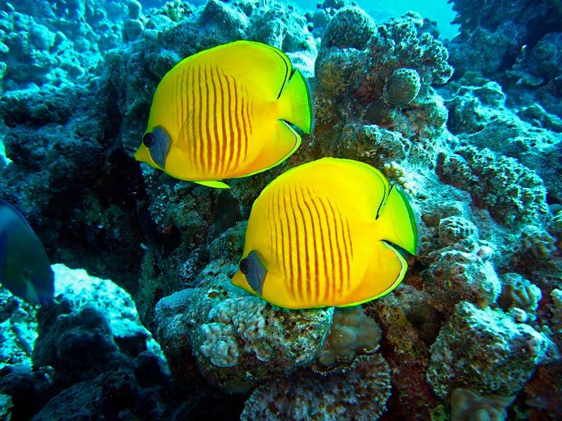 Подводный мир в Египте