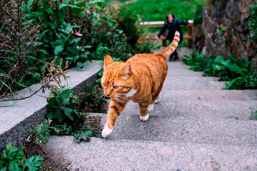 Главный кот города