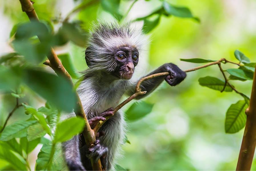 Национальный парк Джозани